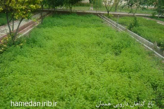 باغ گیاهان داروئی بوعلی سینا