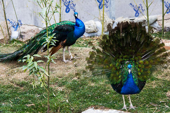 عکس باغ پرندگان آستارا