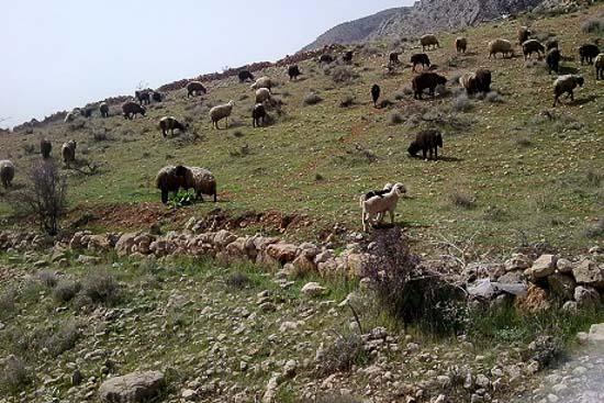 کوه دراک شیراز فارس