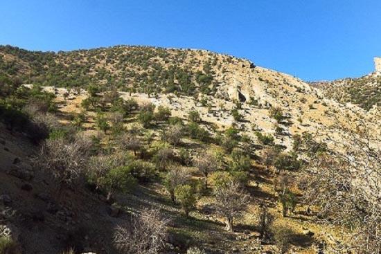 دره اوک  فارس