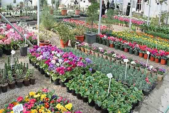 بازار گل و گیاه همدانیان
