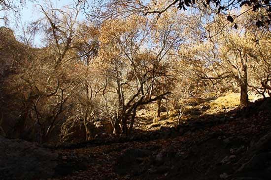 تصویر منطقه گردشگری دره ارزنه