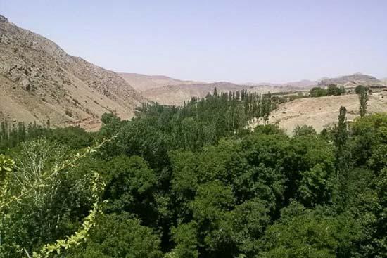 تصویر منطقه ییلاقی درخت جوز
