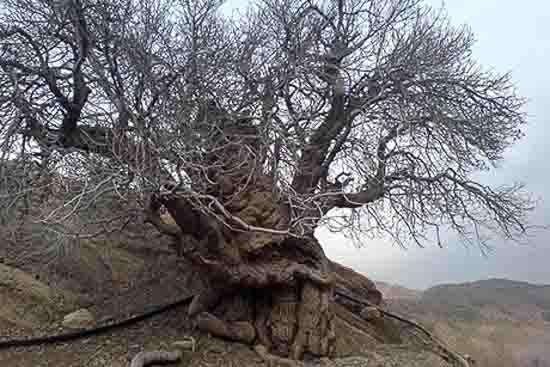تصویر روستای خوشاب