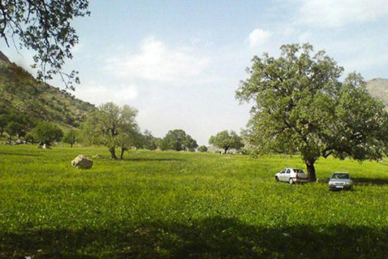 منطقه حفاظت شده میان جنگل فارس