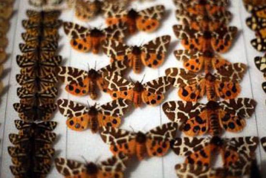 عکس موزه جانور شناسی و حشرات دانشگاه کشاورزي