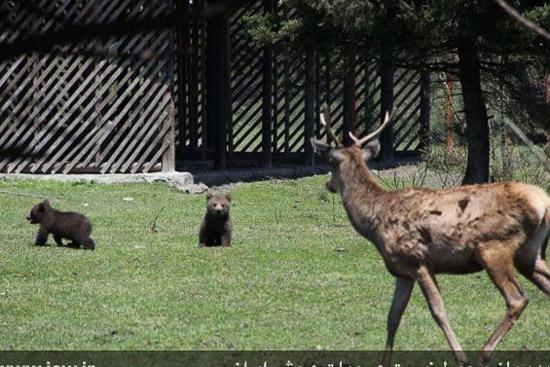 عکس پناهگاه حیات وحش لوندویل