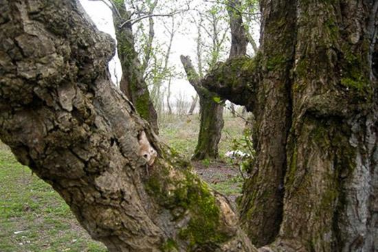 پارک جنگلی بندر کیاشهر