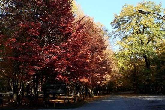 پارک جنگلی قرق