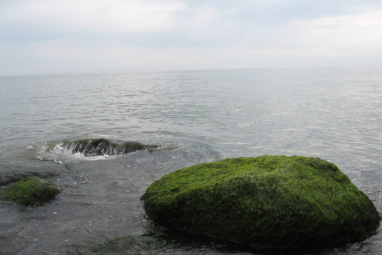 عکس پارک ساحلی شریعتی