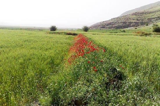 سرآب سیاه منصور آباد فارس