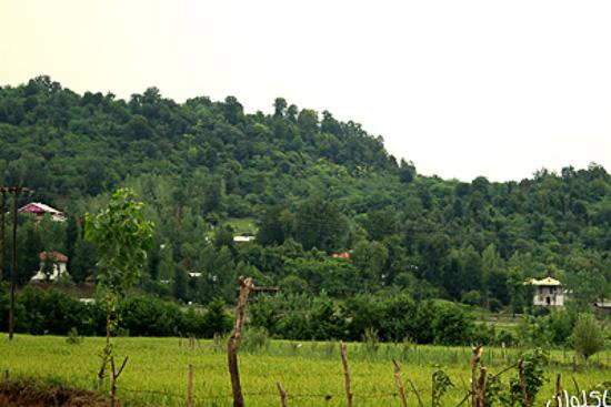 عکس شهر ماکلوان
